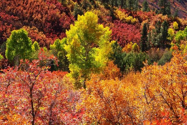 Dallas Divide , Autumn