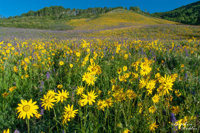 CRESTED BUTTE #117