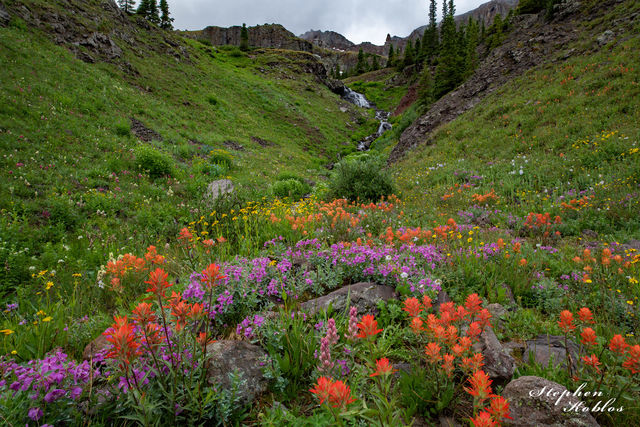 MOUNTAIN FLOWERS #315