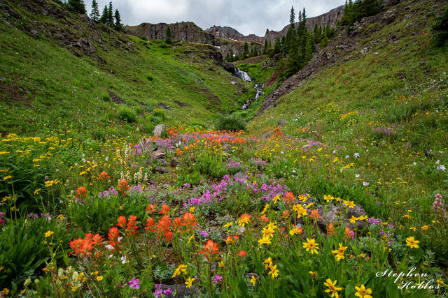 MOUNTAIN VALLEY FLOWERS #317