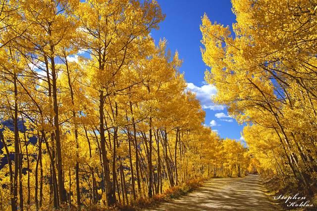 Boreas Pass Rd. , Fall Color