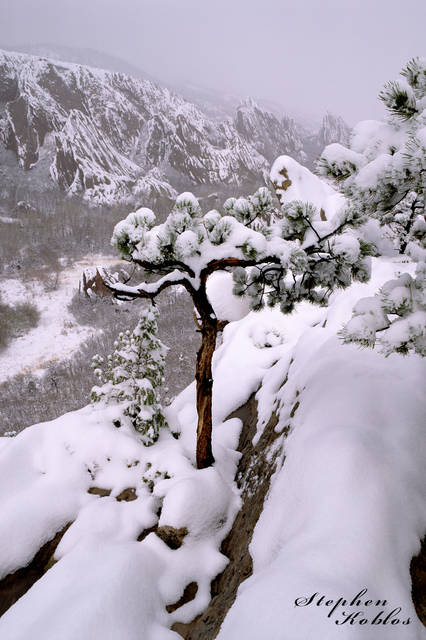 Roxborough State Park , winter