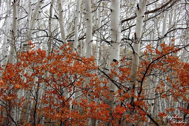 scrub oak , last dollar road