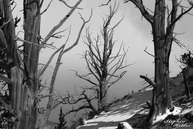 boreas pass, trees