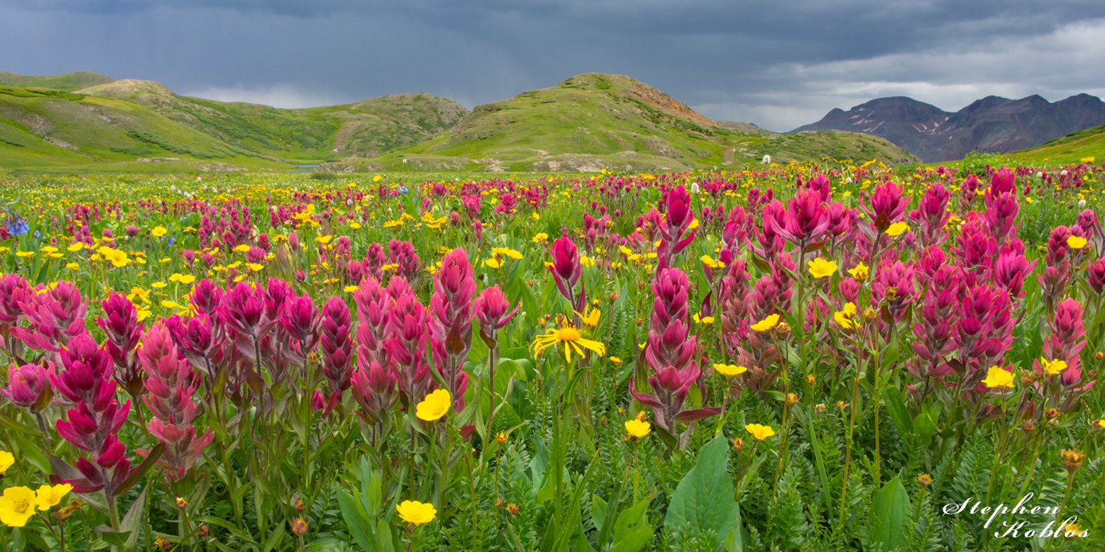 Fields of Rosy Paintbrush  Limited Edition of 250