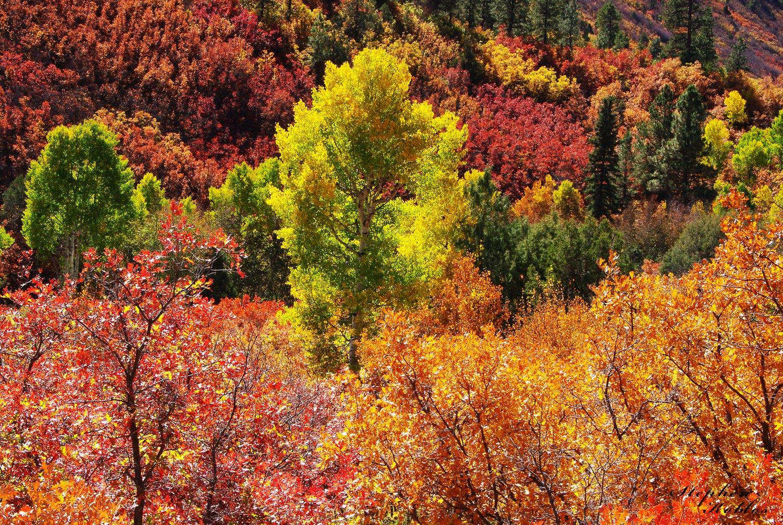 Dallas Divide , Autumn, photo