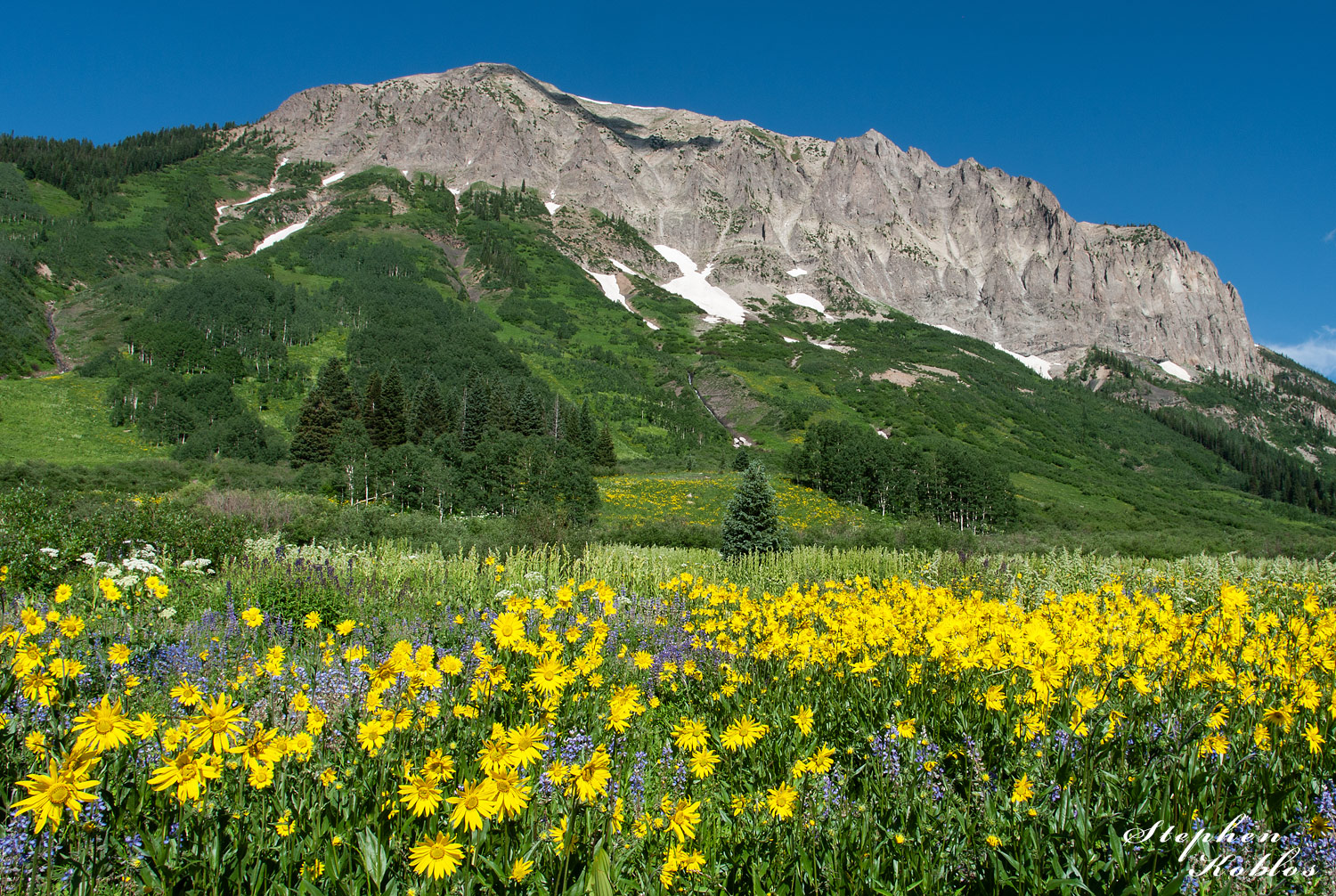 Crested Butte Flowers, photo