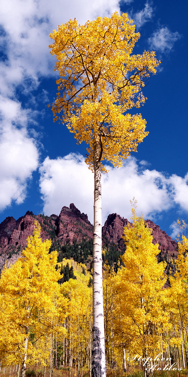 Autumn in the maroon bells snowmass wilderness.limited Edition of 250