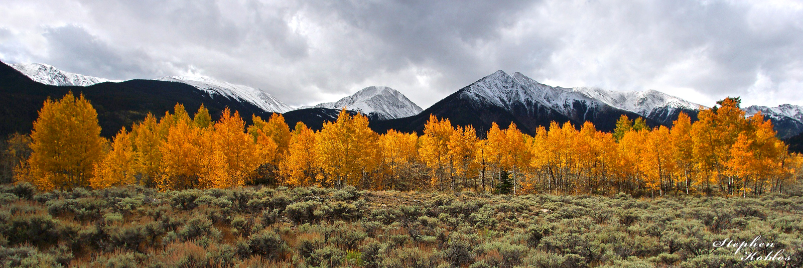 Golden Aspens  Limited Edition of 250