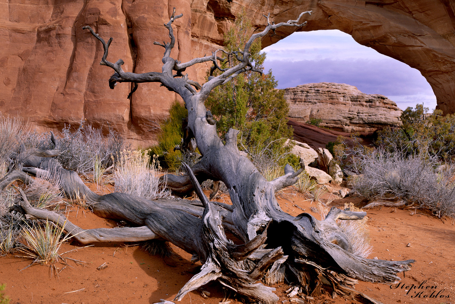 Dead tree at Arches N.P.   Limited Edition of 250