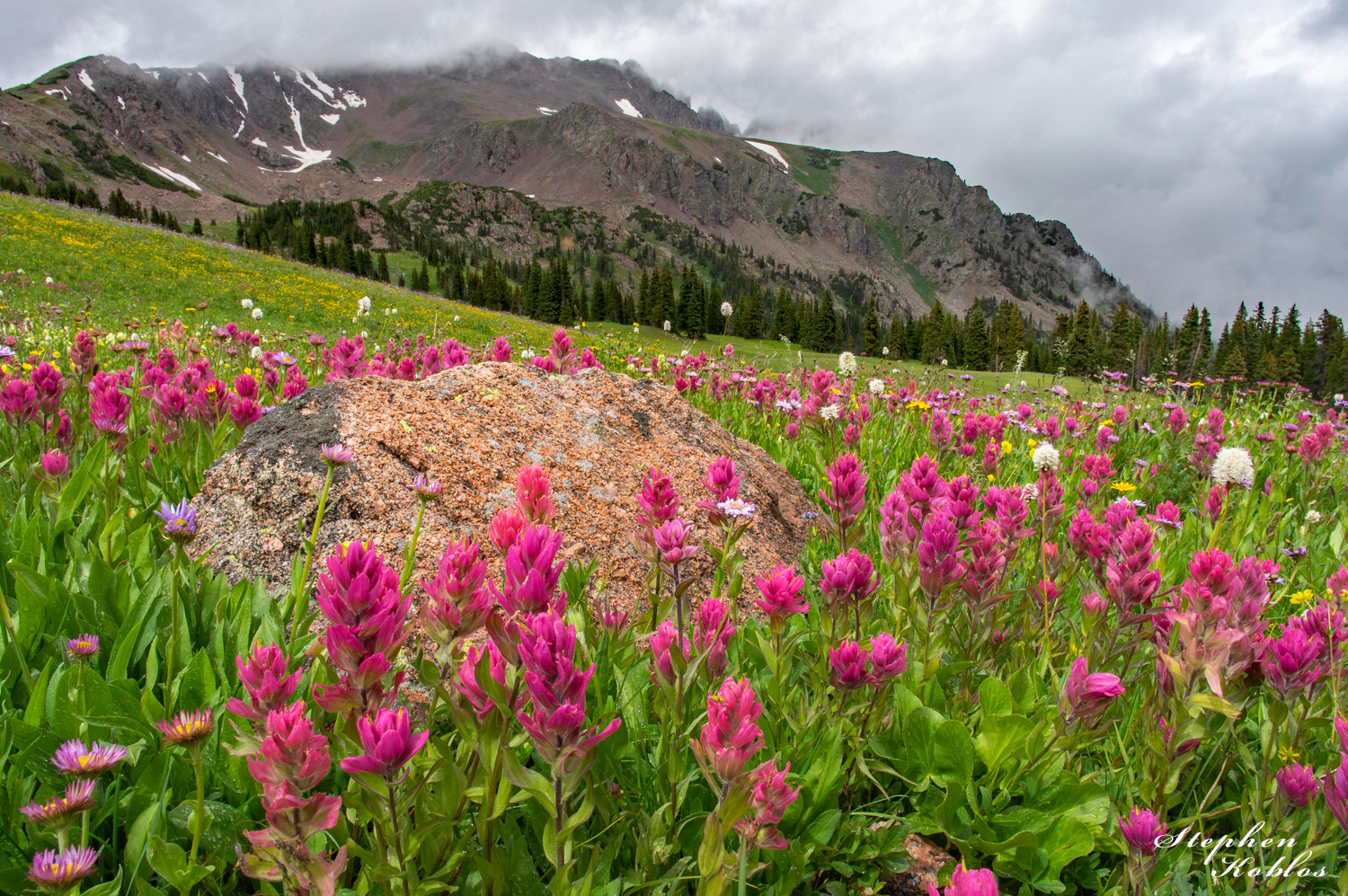 Rosy Paintbrush below Eccles Pass.  Limited Edition of 100