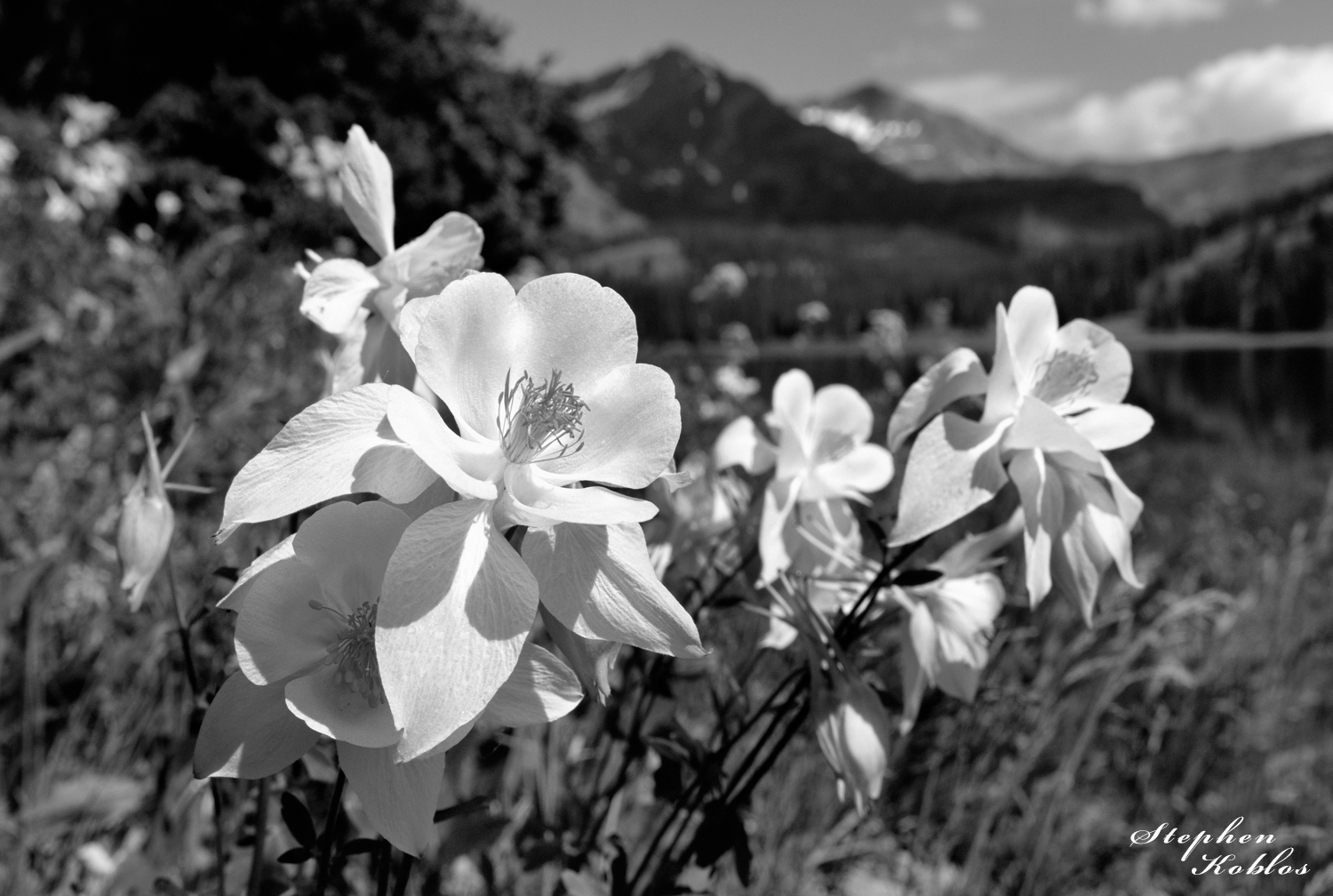 Columbines at Lake Irwin. Limited Edition of 100