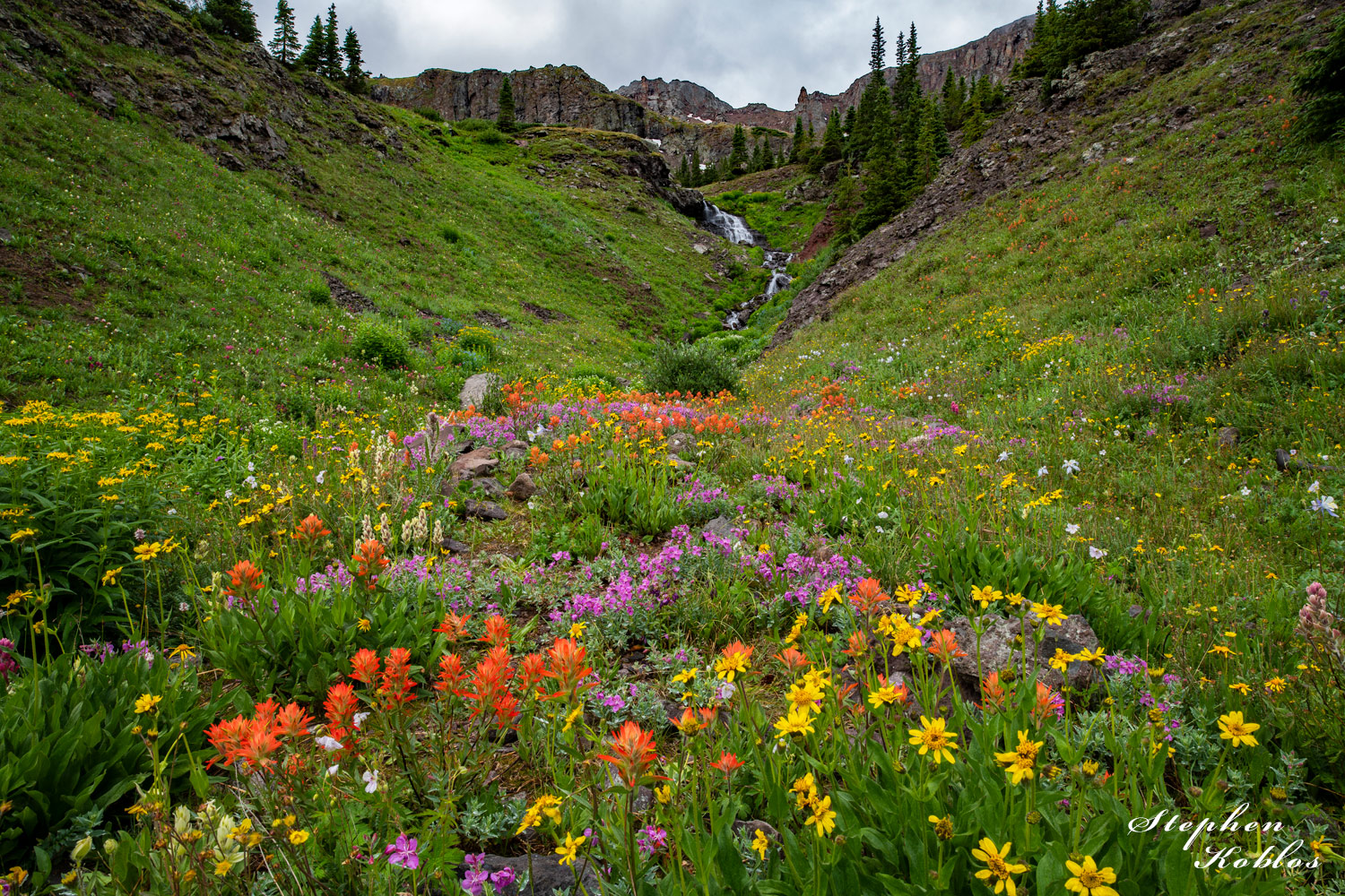 Wildflowers under the Cimarron mountains Limited Edition of 100