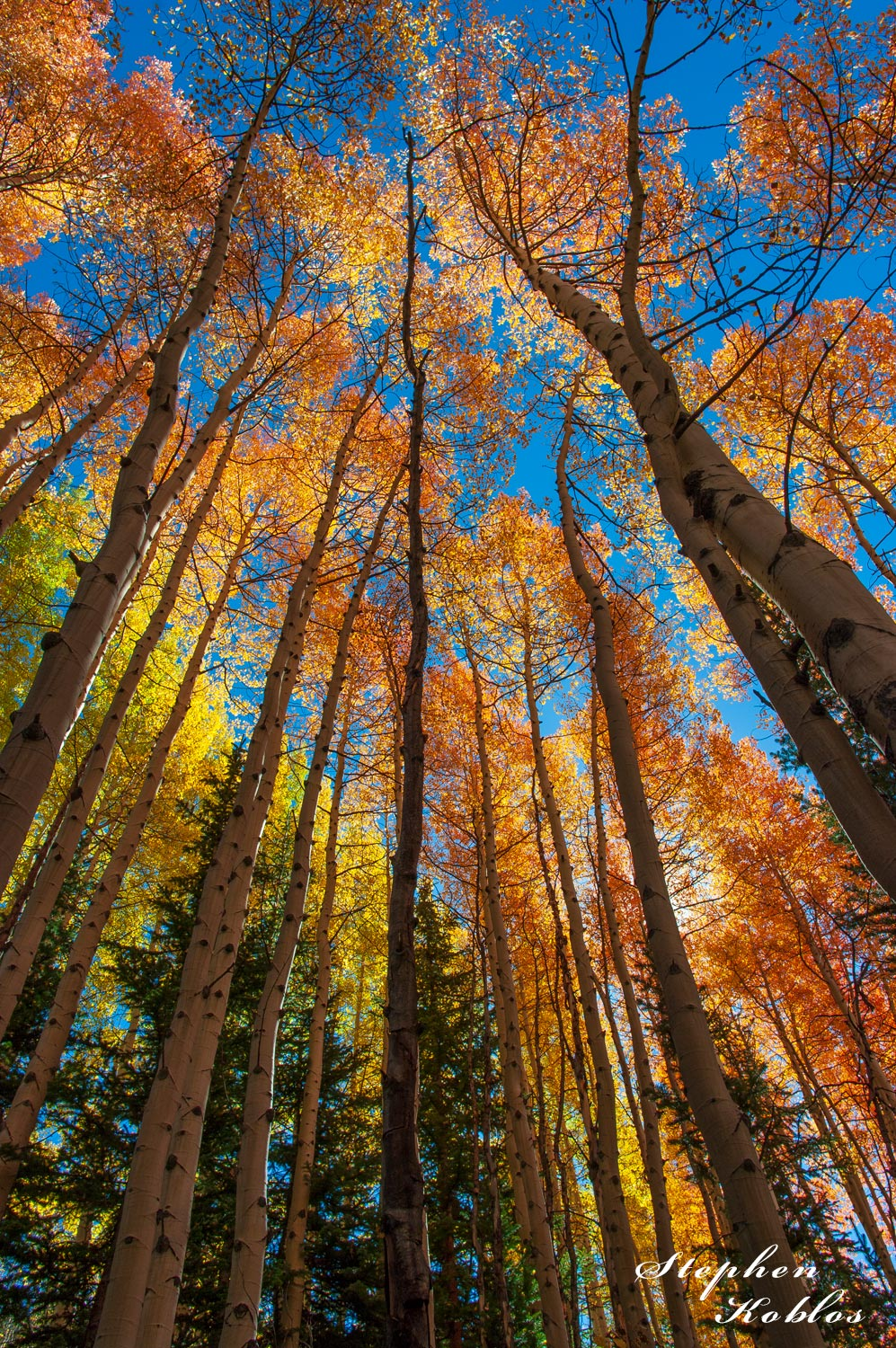 Autumn In Aspen, photo