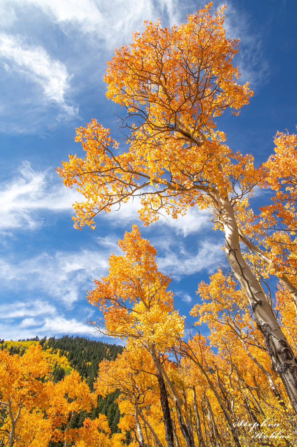 Fall on Boreas Pass Road  Limited Edition of 250