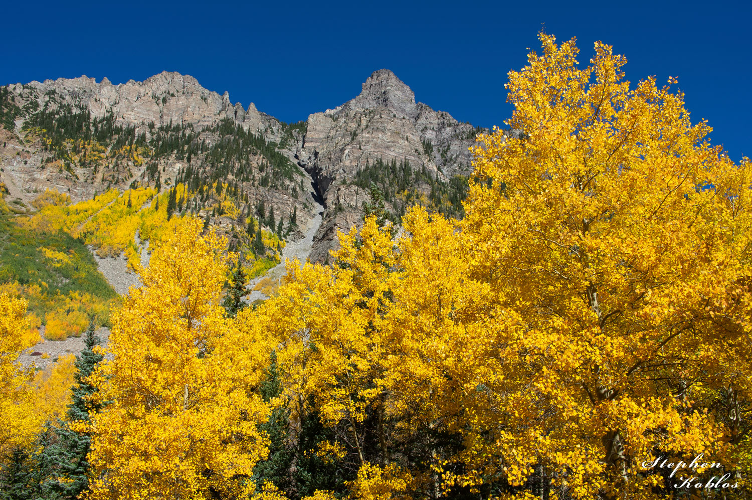Golden Aspens At Snowmass  Limited Edition of 250