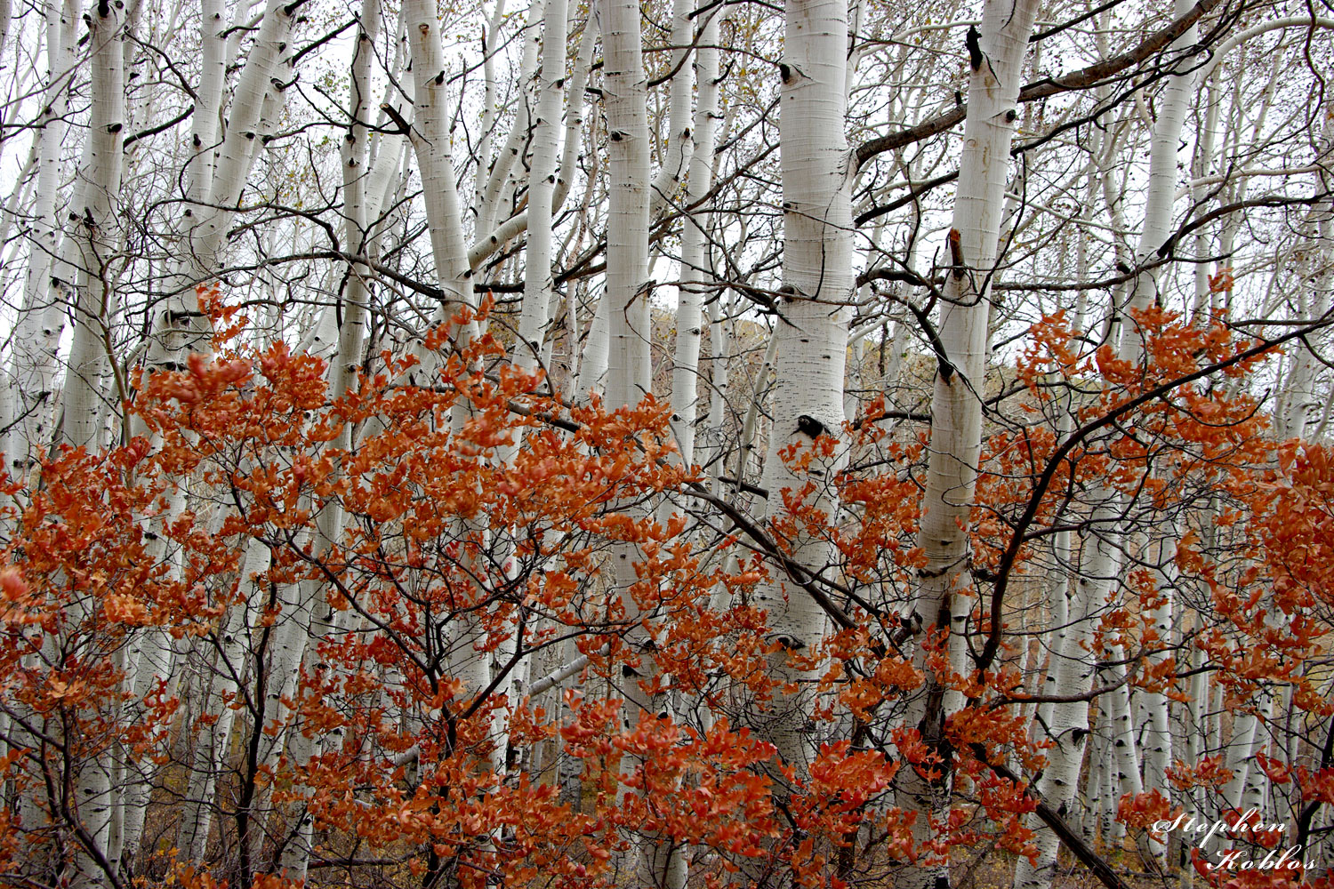I was driving on Last Dollar Road in late in the fall of 2009, after most of the aspen leaves had fallen, when I came across...
