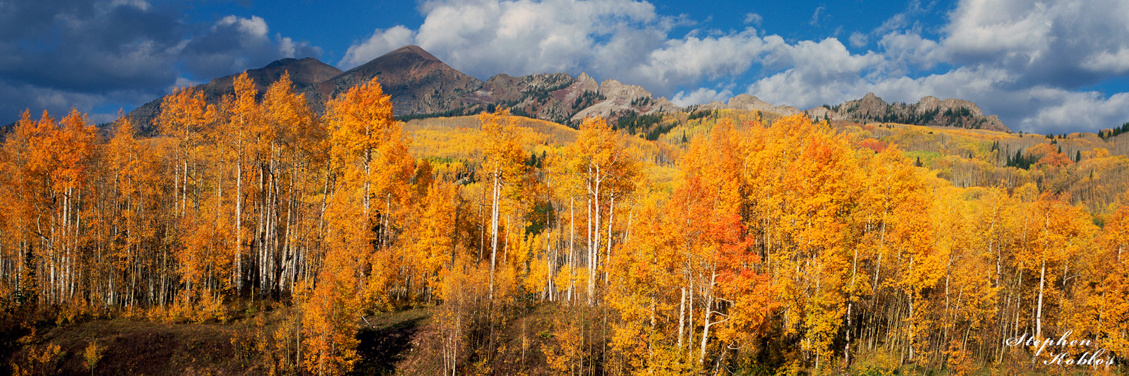 Crested Butte , Aspens, photo