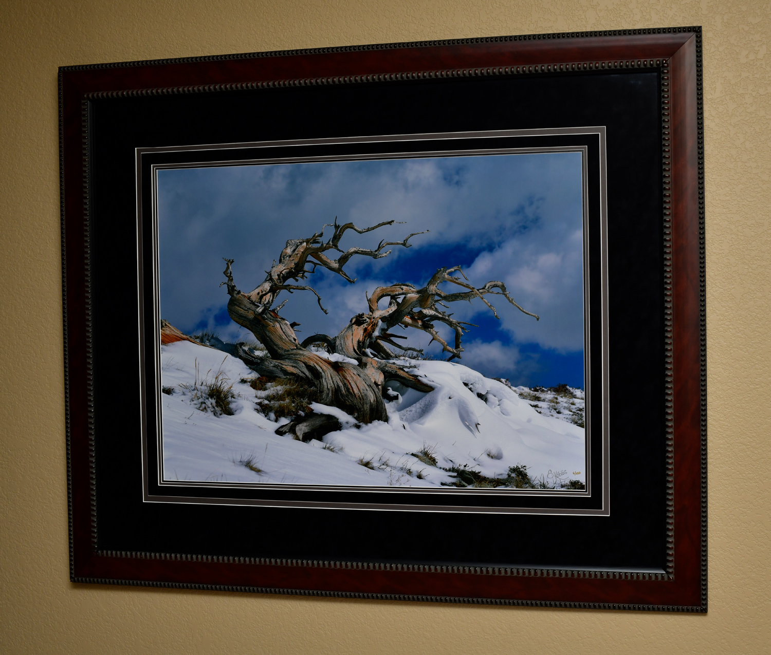 """Windy Ridge 2003. The photo dimensions are 28""""x38"""" . The frame dimensions are 46""""x56""""."""