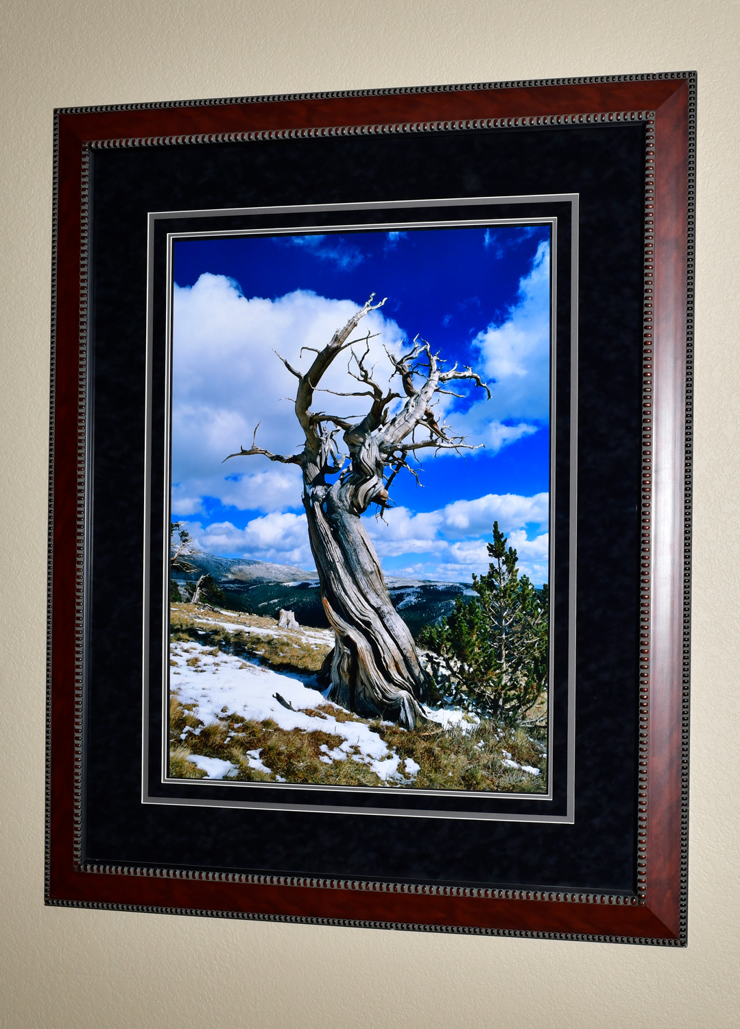 """The photo dimensions are 28""""X38"""". The frame dimensions are 46""""X56""""."""