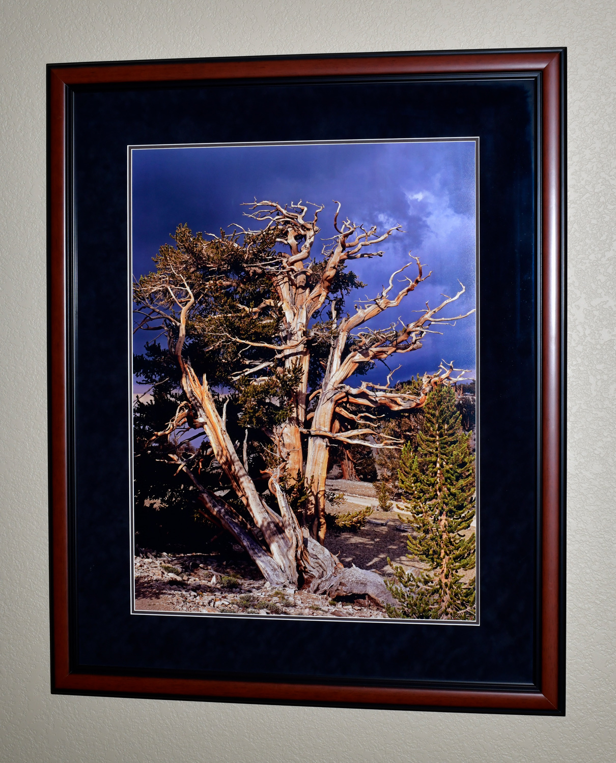 """The photo dimensions are 24""""x32"""". The frame dimensions are 36""""x44""""."""